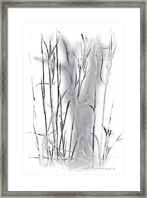 Sentinel Shadow Framed Print
