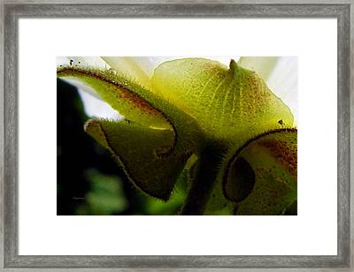 Sepals Too Framed Print by Ken Young