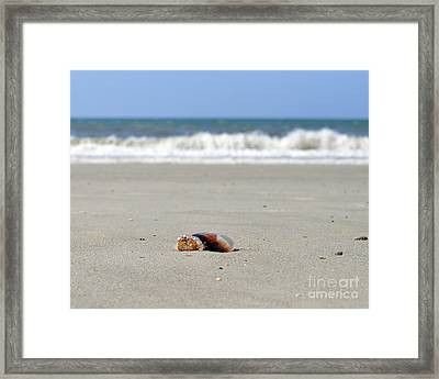 Separation Anxiety Framed Print by Al Powell Photography USA