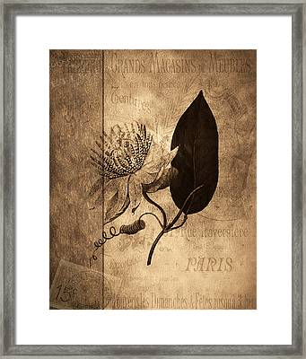 Sepia Botanical Framed Print by Bonnie Bruno