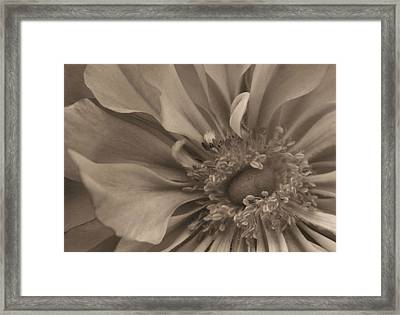 Sepia Floral Framed Print by Kristin Elmquist