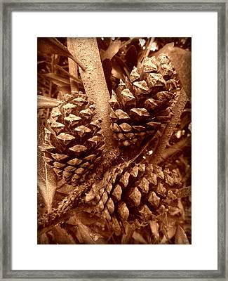 Framed Print featuring the photograph Sepia Pine Cones Trio by Cindy Wright