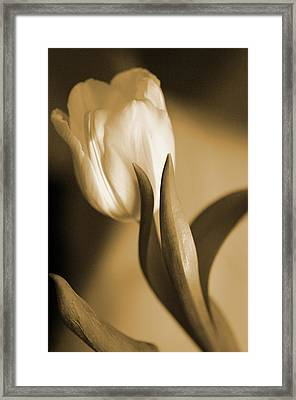 Framed Print featuring the photograph Sepia Tulip 2 by Peg Toliver