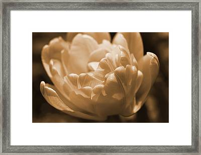 Framed Print featuring the photograph Sepia Tulip Frill by Peg Toliver