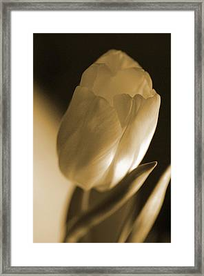 Framed Print featuring the photograph Sepia Tulip by Peg Toliver