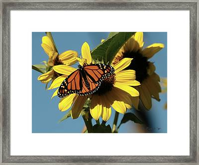 September Visit Framed Print