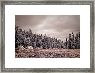 Framed Print featuring the photograph Sequoia by Mike Irwin