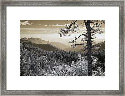 Sequoia View Framed Print