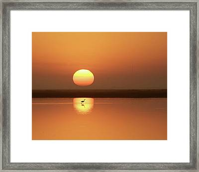 Serendipity Framed Print by Photo by Richard Lionberger