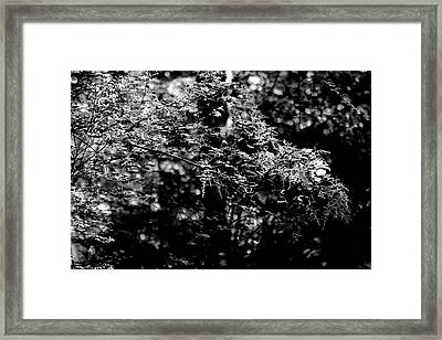 Framed Print featuring the photograph Serene by Jeanette C Landstrom