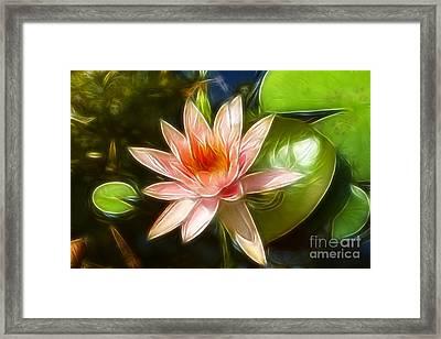Serene Pink Waterlily  Framed Print by Darleen Stry