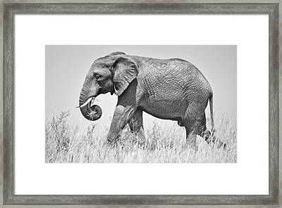 Serengeti Elephant Framed Print by Richard Matthews