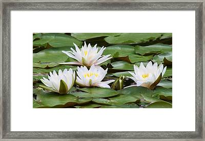 Serenity  Framed Print by Bruce Bley