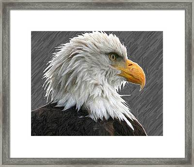 Serious Eagle Framed Print by Carrie OBrien Sibley