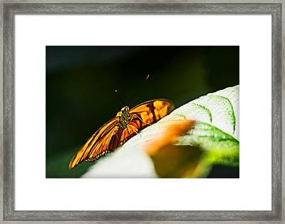 Set For Flight Framed Print