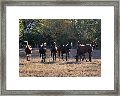 'seven Of Eleven' Framed Print by PJQandFriends Photography