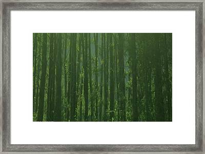 Seward Woods Framed Print