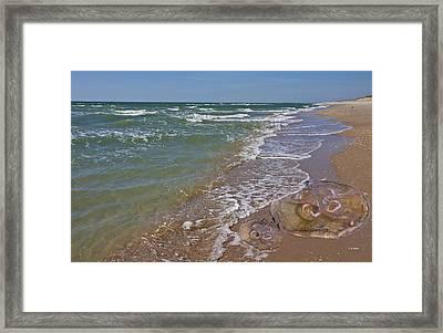 Shackleford Beach Jelly Framed Print