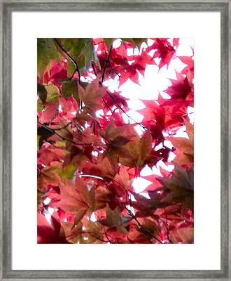 Shades Of Autumn Framed Print by Debra Collins