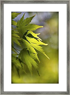 Shades Of Green And Gold. Framed Print by Clare Bambers