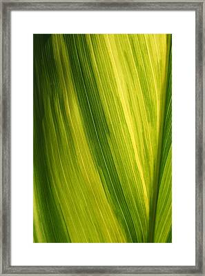 Shades Of Green Framed Print by Ken Riddle