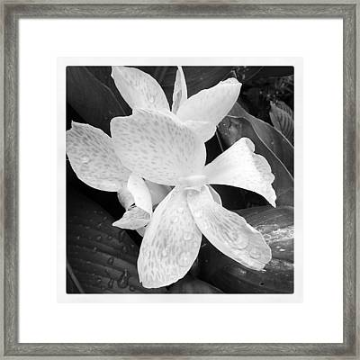 Shades Of Grey Framed Print by Chasity Johnson