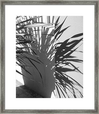 Shadow #1 Framed Print by Rob Ladely