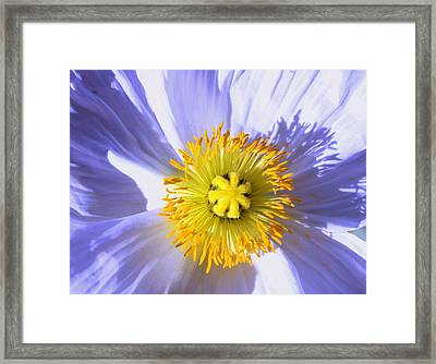 Shadow And Light Framed Print by M Diane Bonaparte
