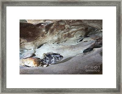 Shadow Bass Perched On A Rock Ledge Framed Print by Terry Moore