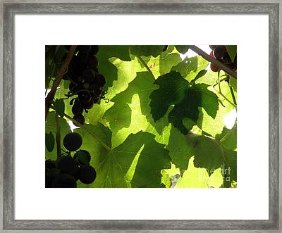 Framed Print featuring the photograph Shadow Dancing Grapes by Lainie Wrightson