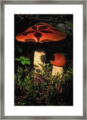 Shadow Of Leaves On A Mushroom Framed Print by Robert Postma