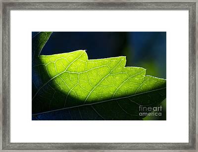 Shadow On Leaf -1 Framed Print