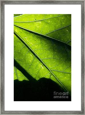 Shadow On Leaf -2 Framed Print