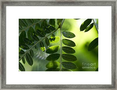 Shadow On Leaf -5 Framed Print