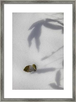Framed Print featuring the photograph Shadow On Snow by Tad Kanazaki