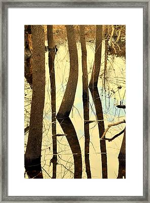Shadow Trees Framed Print by Marty Koch