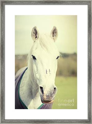 Shadowfax Framed Print by Violet Gray
