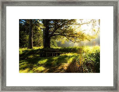 Shadowplay Framed Print by Randy Wood