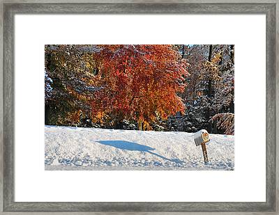 Shadows In The Snow Framed Print by Kimberly Little