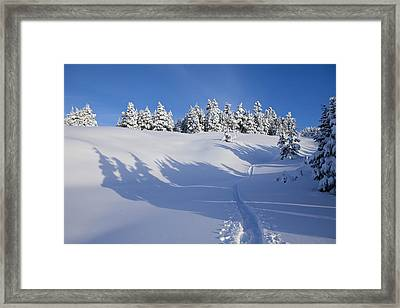 Shadows On The Trail Framed Print by Tim Grams