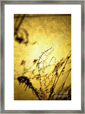 Shadows Framed Print by Rossi Love