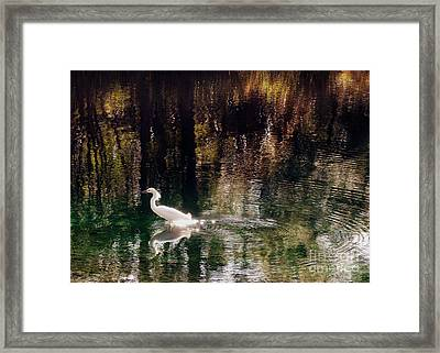 Framed Print featuring the photograph Shadowwaters by Lydia Holly