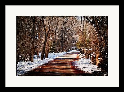 Leaning Trees Over Road Framed Prints