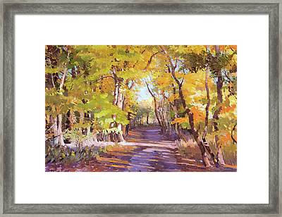Shady Path At Fall In The Woods Framed Print
