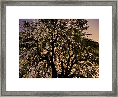 Shady Tree ... Framed Print