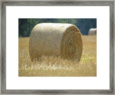 Framed Print featuring the photograph Shag Carpet by France Laliberte