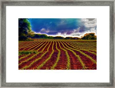 Shagadelic Crop Lines Framed Print by Bill Tiepelman