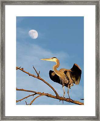 Shaking It Out Framed Print by E Mac MacKay