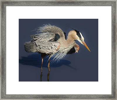 Shaking Out My Tail Feathers Framed Print by Paulette Thomas