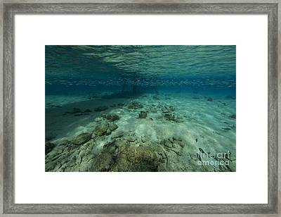 Shallow Waters Under Salt Pier Framed Print by Terry Moore